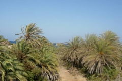 Vai palm forest